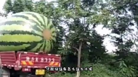 搞笑视频:这能怪西瓜大吗都怪你车太小了