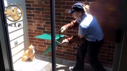 搞笑视频:本想抓小猫,确被小猫绝地反击,太