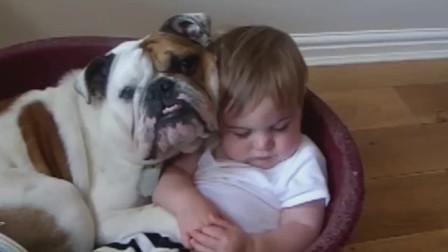 搞笑动物:萌娃小可爱和汪星人的睡姿可真是一模一样呀!太逗了!
