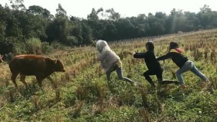 美女:老牛,你吓到我了!牛:你们才吓人呢!