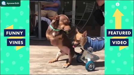 搞笑动物视频合集,让你一次笑个够,动物的娱