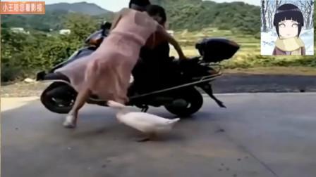 搞笑视频:小姐姐甩头的姿势真棒