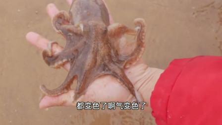 美女赶海抓章鱼,这技术真是让人佩服啊