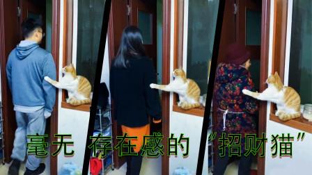 搞笑视频:别无视我呀,好歹我是一只招财猫,