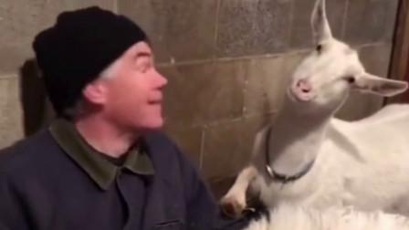 搞笑视频:论合照你可能会输给羊
