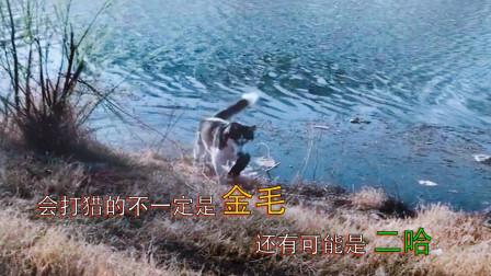 搞笑视频:主人,我救了一只溺水的王八,你给我做个红烧王八呗