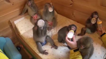 韩国美女养的小猴子一个个都还没有断*呢,真是可爱的小家伙