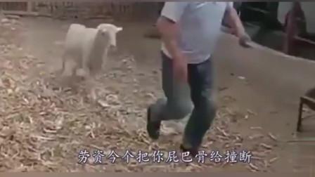 搞笑动物视频,配上幽默四川方言,笑得肚儿痛