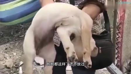 搞笑视频 狗生入戏 全靠演技 秒杀小鲜肉