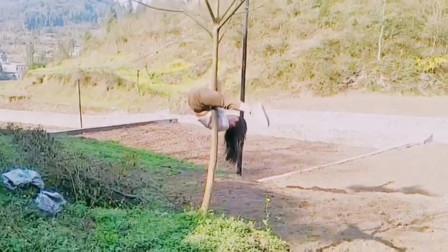 钢管舞老师回村不忘练基本功,辛苦这棵小树了