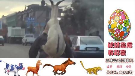 老外真会玩,动物与人恶搞集锦,视频最后的彩
