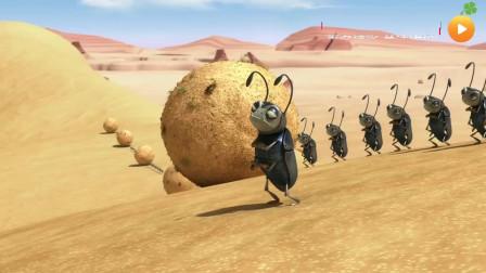 「幽默搞笑」「沙漠里的小伙伴系列」019屎壳郎