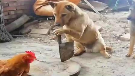 搞笑视频:狗子:今天要敢嚣张一下,我手中的
