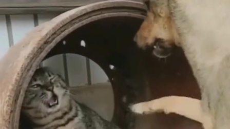 搞笑视频:狗狗人家都后退好几次了,你居然还
