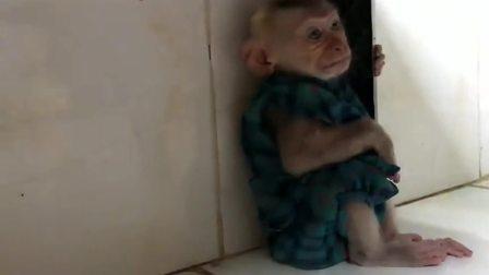 搞笑视频:四川小猴子生气大哭,你哭成这样真