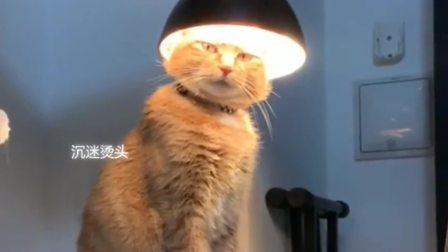 搞笑视频:湖南小猫:盯着我看什么?难道没见