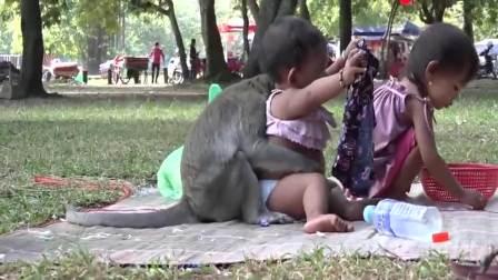 搞笑视频:印度妈妈带孩子去公园玩,结果一只