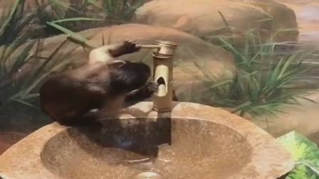搞笑视频:人类的发明真高级,四川猴子玩了半