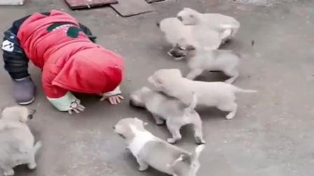 搞笑视频:送儿子回河南农村**家两天,接着就发