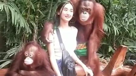 美女和大猩猩合影,一只淡定的坐着,另一只会