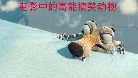 盘点: 电影中的高能搞笑动物,可爱呆萌搞笑