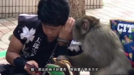 搞笑视频:猴哥 给你介绍一个单身妹子!