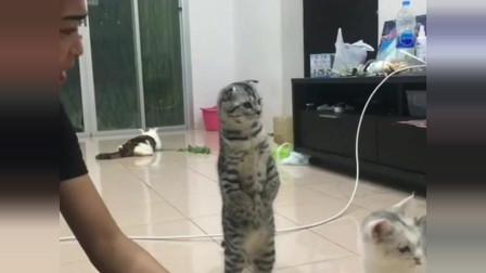 广东美女养了三只猫,一只比一只奇葩,铲屎官