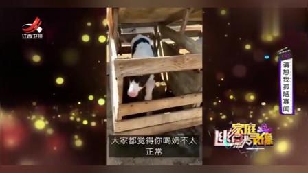 家庭幽默录像:有的*牛就是与众不同,喝牛*竟然