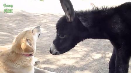 驴的搞笑视频