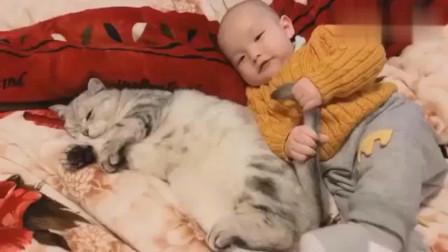 萌宠猫咪:猫咪对大人们凶,对小孩子却很宽容,被孩子抓住尾巴也不反击