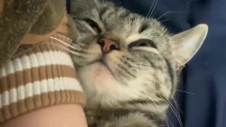 萌宠猫咪:家里猫咪太粘人,天天粘着女朋友,太不要脸了