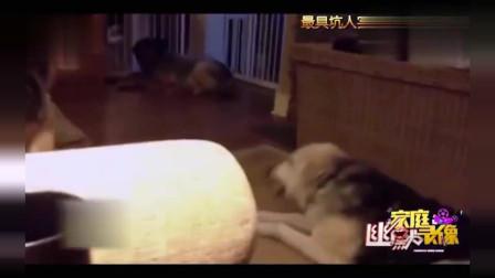 家庭幽默录像:损友不可怕就怕损友高智商,汪