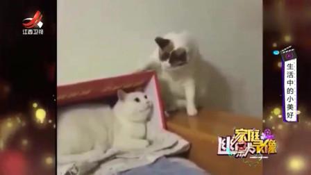 家庭幽默录像:猫在床上躺,拳头从天上来:瞅