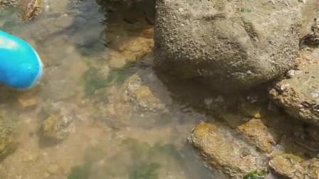 赶海发现海鲜大决战,美女来到的时候章鱼已吐