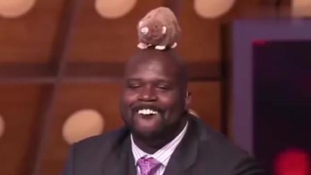 奥尼尔搞笑时刻集锦,果然是被NBA耽误的搞笑巨匠