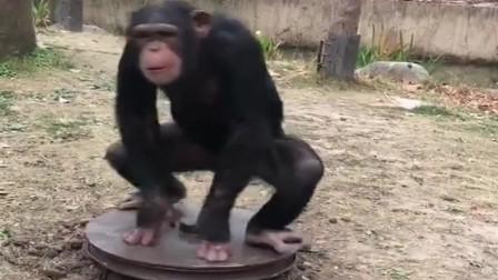 本以为是个恐怖片,看到最后才知道是喜剧片,大猩猩真是太皮了!