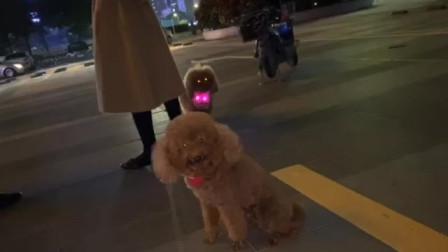 广东的傍晚,街拍狗狗们,你们有没被他们萌到