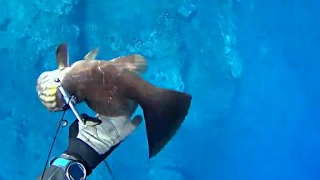 外国小哥潜水赶海 发现只寄居贝壳大章鱼 还捕了条10斤的野生石斑