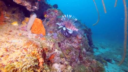 科学家在马里亚纳海沟8143米深处 发现一神奇生物 让人大开眼界