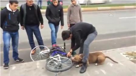 恶犬狂咬自行车不松口 割开轮胎后众人不淡定了 镜头拍下全程