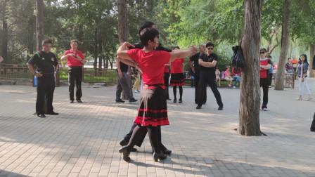 双人十四歩交谊舞完整版
