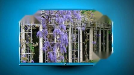 基督教歌曲《紫藤花语》…庄河桥西六号音乐室