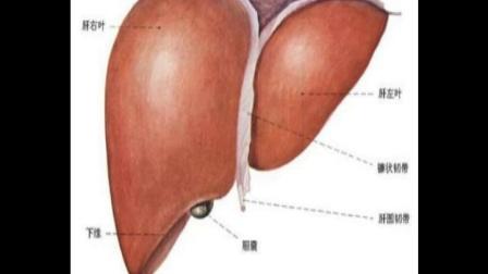 护肝最好方法