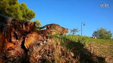 日本著名动物写真摄影师作品---法国猫咪