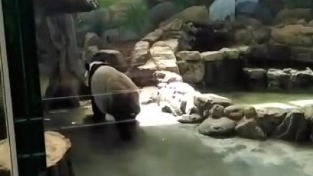 20170327遊臺北市立動物園
