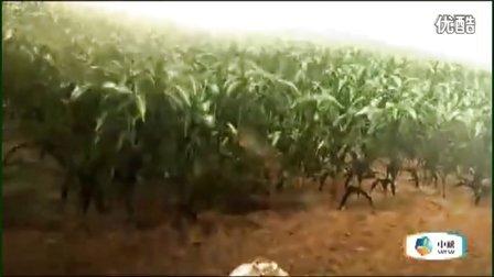 福临门非转基因玉米油