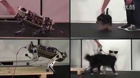Microlecture - How to Engineer a Dog