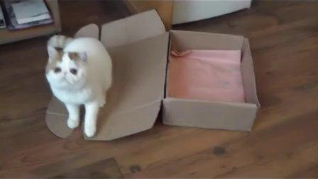 snoopy咪咪稀饭滴纸箱