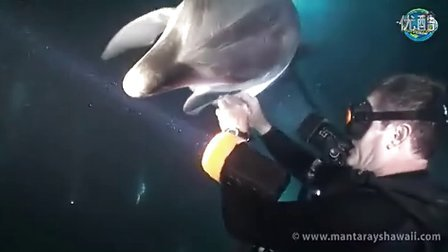 Rescue dolphine