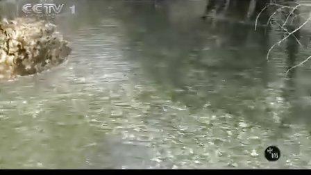 38集纪录片 《黄龙》自然风景